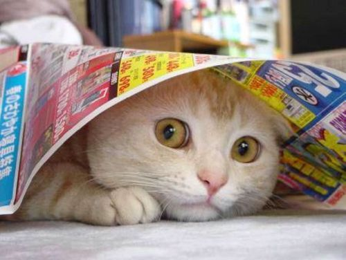 Oui, encore une image de chat qui n'a rien à voir avec l'article.